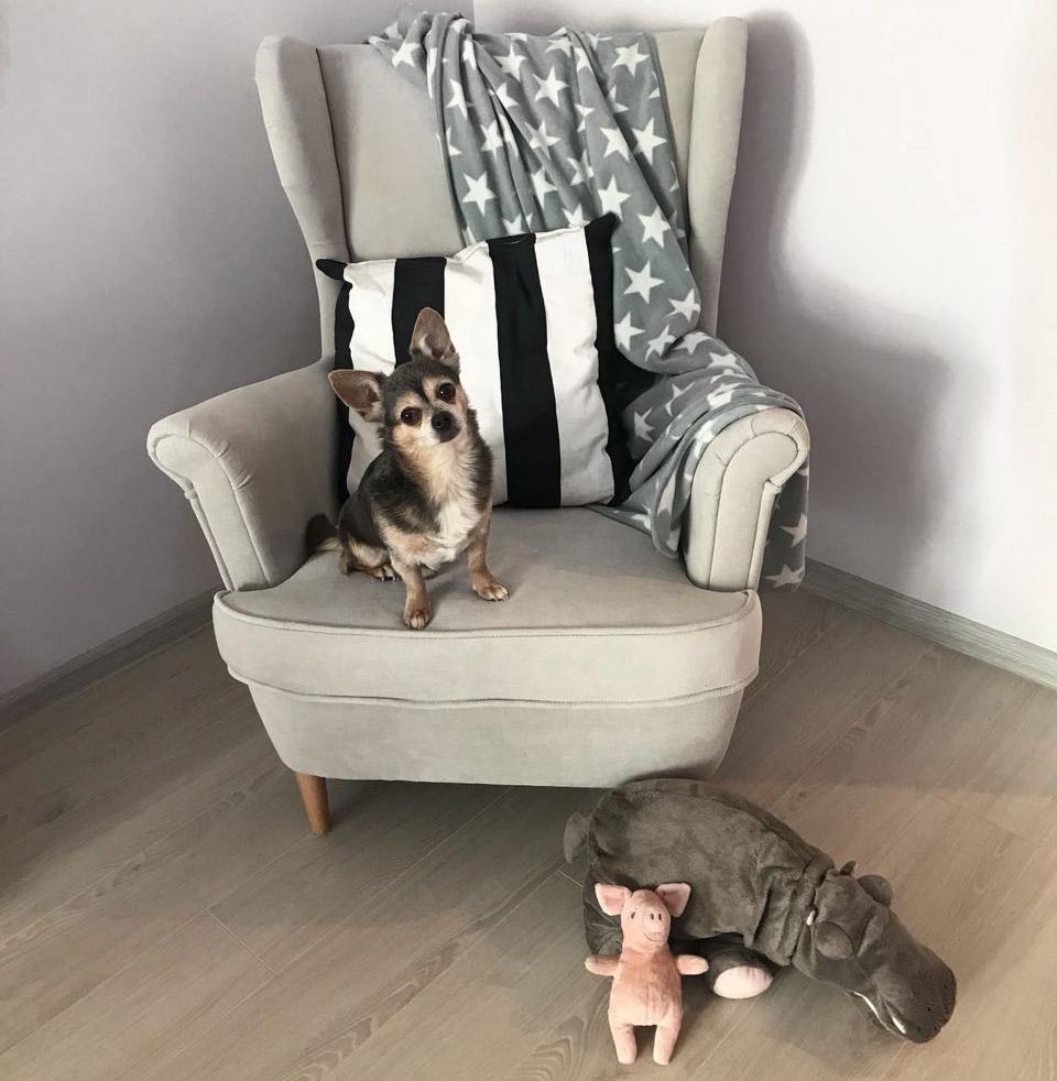антивандальная ткань для кресла от собак